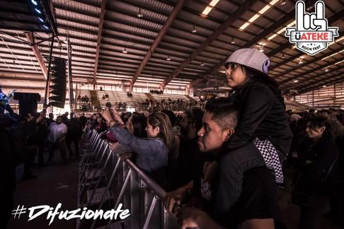 Fans (12)
